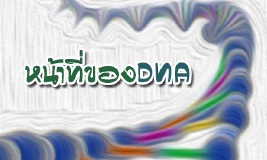 หน้าที่ของ DNA