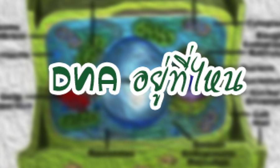 DNA อยู่ที่ไหน