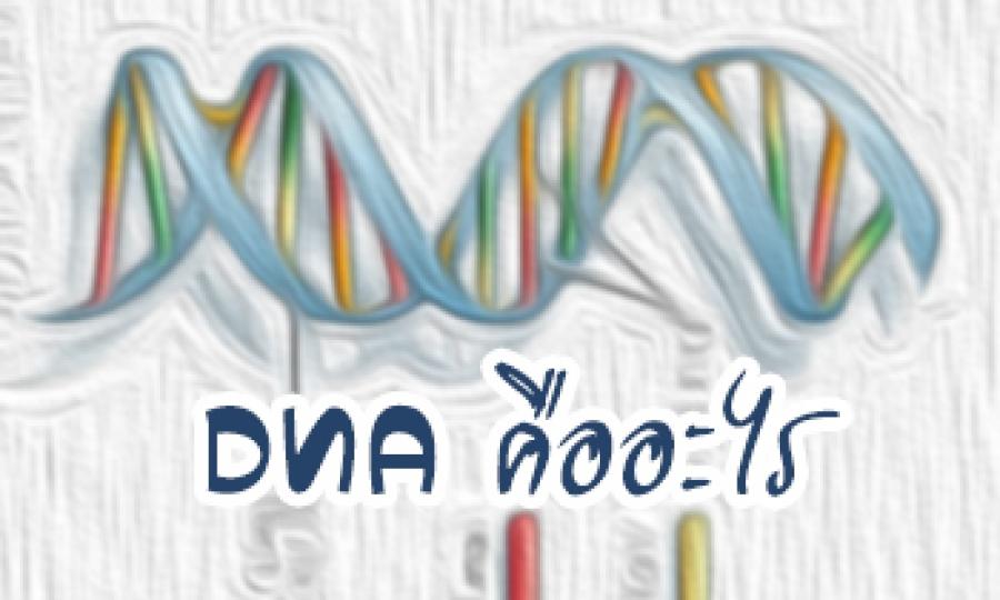 DNA คืออะไร